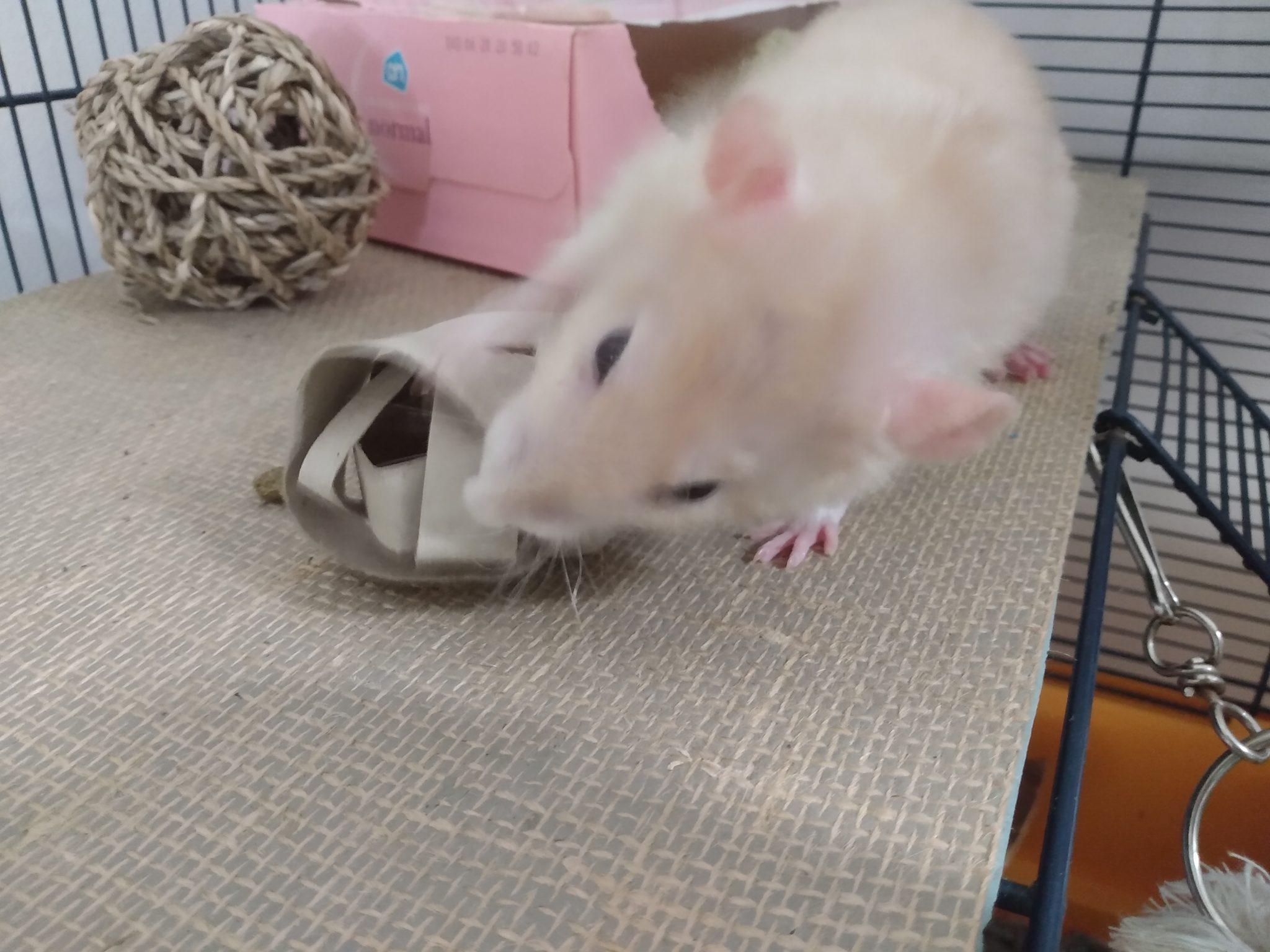 Rat met speelgoed